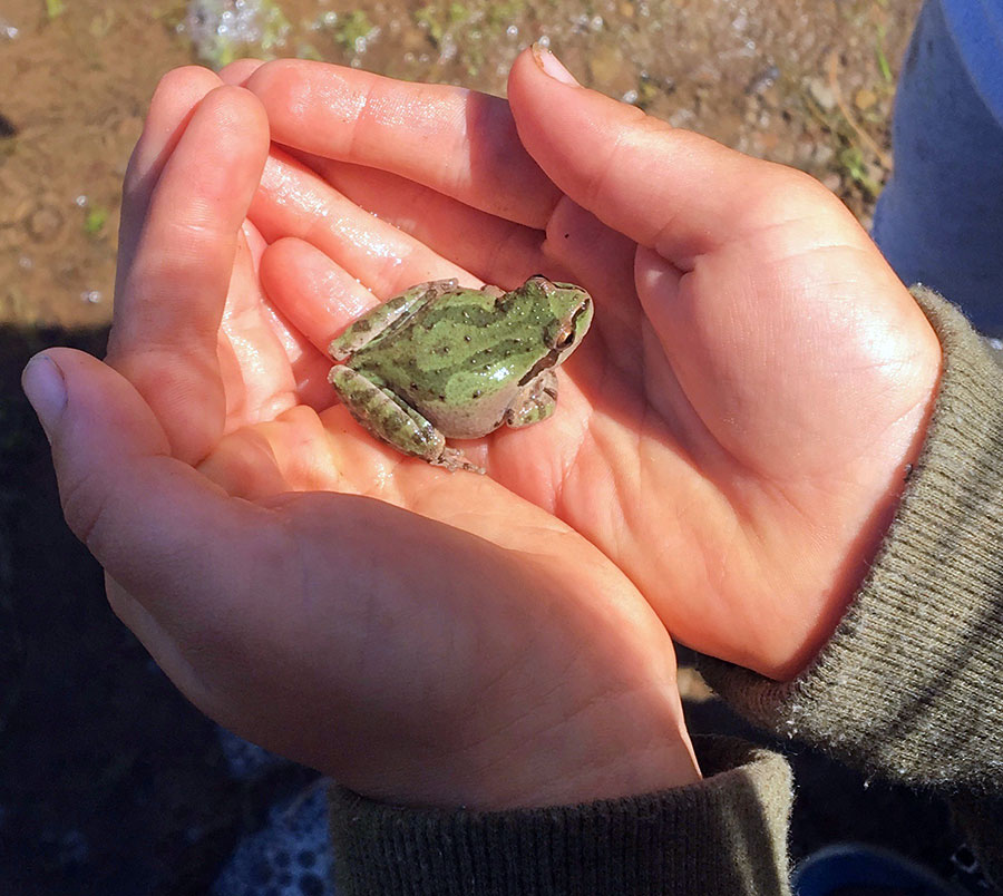 frog in a child's hands. Photo by Wendolyn Bird.